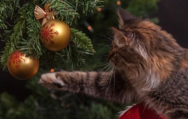 Вопрос о продлении новогодних каникул остается в подвешенном состоянии