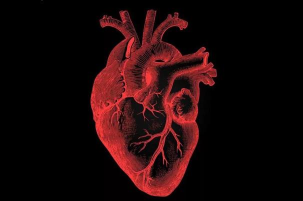 Что позволяет нашему сердцу испытывать чувства