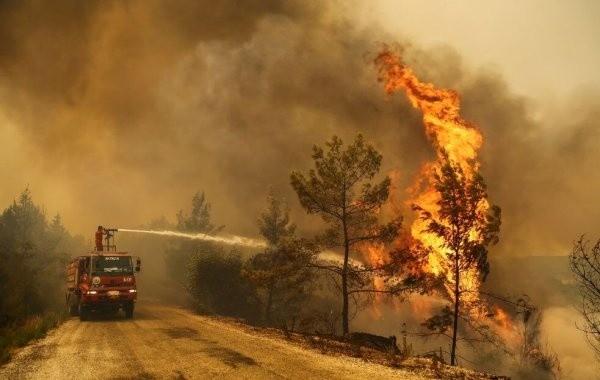 Российских туристов начали эвакуировать из-за лесных пожаров в Турции
