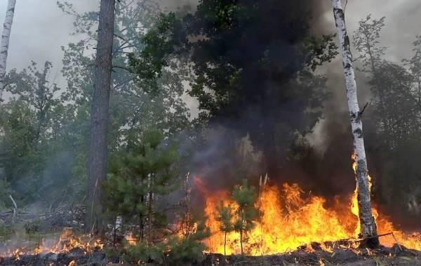 Раскрыты масштабных лесных пожаров в Марий Эл