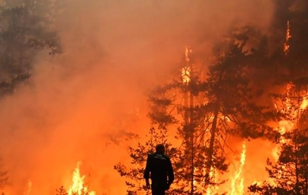 Площадь лесных пожаров в Иркутской области увеличилась